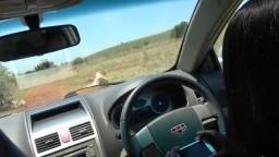 Wild Sex In The Car During Safari Trip